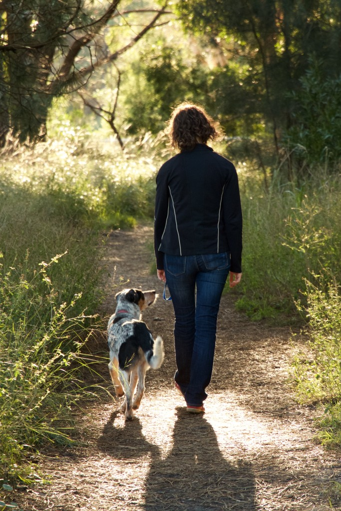 Private dog walking and dog training in Sydney's eastern suburbs